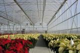 꽃 성장하고 있는을%s Hot-DIP 직류 전기를 통한 강철 구조물을%s 가진 유리제 온실