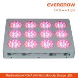 Evergrowの新星T12のモジュールはLEDランプを育てる