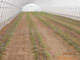 2017 강철 구조물을%s 가진 채소 재배자를 위한 최신 판매 단 하나 경간 온실