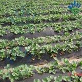 Tela não tecida material de 100% PP para a agricultura