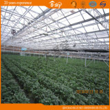 Planting Vegetables&Fruits를 위한 긴 생활 Pan Venlo Type 다중 Span Glass Greenhouse