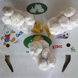 Fornitore con esperienza di aglio bianco fresco dalla Cina