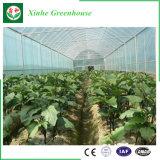 Serre chaude chinoise de film pour des légumes