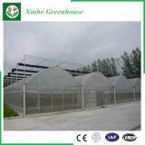 Chambre verte en plastique d'envergure multi d'agriculture pour Vegeatbles