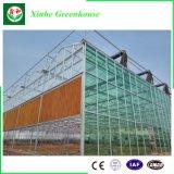 Estufa de vidro comercial para a agricultura