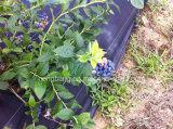 Stuoia del Weed del coperchio al suolo di paesaggio per agricoltura