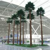 Повелительница пальмы Similation поставкы фабрики