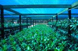 Farbton-Kinetik des Landwirtschafts-Sonnenschutz-Netz-50-90% mit UVschutz