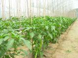 プラスチック網に上る作物Suppot