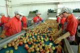 Fruchtsaft, der Fabrik-Saft-Fabrik-Geräten-Fruchtsaft Hersteller maschinell bearbeiten lässt
