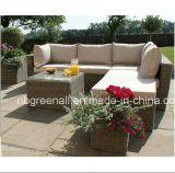 屋外の総合的な藤の物質的な庭セット