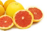 Естественное изготовление фабрики порошка выдержки грейпфрута