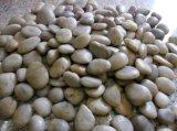 自然な小石の石、白くおよび黒い大理石の小石の石