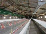 Automatisches Geflügel steuern Halle-Geräte für Bratroste