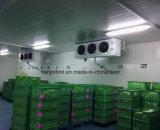 Congelador de ráfaga de la buena calidad/conservación en cámara frigorífica/cámara fría para el precio de venta