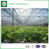 Serra di vetro di grande coltura idroponica commerciale