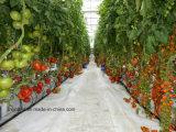 Дом Hydroponic систем листа PC зеленая для томата