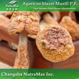 Extrait naturel de Subrufescens d'agaricus (polysaccharides de 30%)
