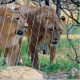 Rede inoxidável do jardim zoológico do cabo entrançado de aço