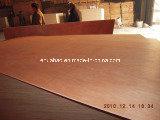 Grado del pegamento BB/CC de la base WBP del álamo de la madera contrachapada de Okoume