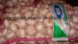 Aglio bianco normale fresco/aglio bianco puro