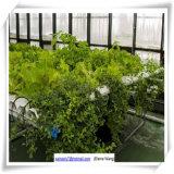 グループのための小型庭のガラス温室