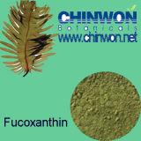11. Queimadores gordos Fucoxanthin 10% -50% do extrato da alga de Brown