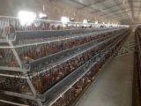 Certificat automatique ISO9001 de cage de couche galvanisé par qualité
