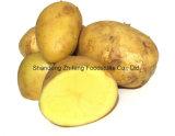 Frische Kartoffel mit laufender Jahreszeit für den Export
