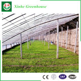 Serre chaude solaire agricole de film de coût bas à vendre