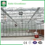 Agricoltura della serra di vetro per l'ortaggio/fiori
