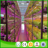 Seperate T8 LED Grow Light for Plant Growing