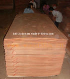 folheado vermelho da folhosa do corte giratório de 0.3mm para fazer a madeira compensada
