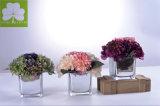 가정 Deco를 위한 Eletroplated 정연한 유리제 남비에 있는 로즈와 가진 Bonsai Hydrangea