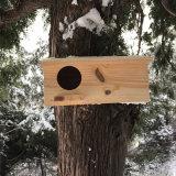 Camere di legno esterne preservative dell'uccello