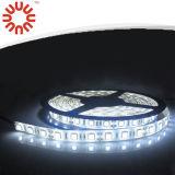 Lumière de bande continuelle approuvée du courant SMD5050 DEL de la CE