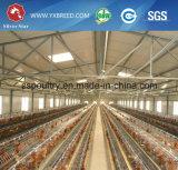 Grande capacité un type cage de batterie de poulet se vendant de Chine