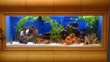 Jogo de vidro Desktop dos peixes do aquário