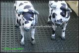 Циновка коровы, Antislip циновка, животная циновка, малая квадратная резиновый циновка