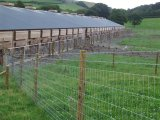オーストラリアMaket/Metal Farm Field Fence/Electric Galvanized Cattle Fence (Manufacturer)のための牛Fence