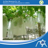 PP Nonwoven Fabric para Agriculture Fruit Cover