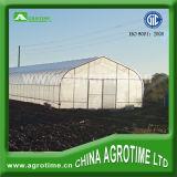 Estufa agricultural econômica para o vegetal (CMS3810)
