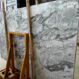 灰色の穀物の大理石のブロックが付いているArabescato Corchiaの白い大理石