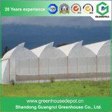 다중 경간 PE 필름 녹색 집