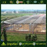 Vorfabriziertes große Überspannungs-Stahlkonstruktion-Lager (LS-SS-553)