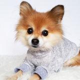 عادة [هندمد] كلب ملابس في أبيض