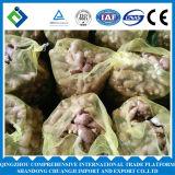 Gengibre gordo fresco com boa qualidade e preço do competidor