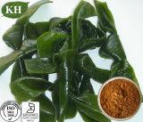 Polysaccharides de empêchement normaux de Cancer de Kingherbs 15%, extrait de varech de 30%