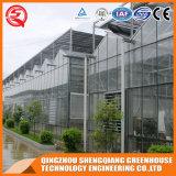 Casa verde de vidro do jardim de China Venlo