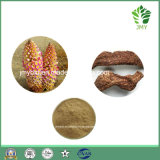 Cistanche純粋なTubulosaのエキス、Phenylethanoidのグリコシド40%、80%